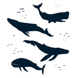 Marine Mammals Silhouet royalty-vrije illustratie
