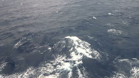 Marine stock video