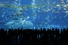 Marine museum Stock Images