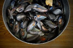 Marine mussels fried in a pan Royalty Free Stock Photo