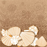 Marine pattern with shells Stock Photography