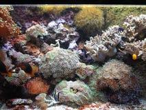 Marine plant. Marine vegetation under water, water world royalty free stock photography