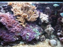 Marine plant. Marine vegetation under water, water world stock images