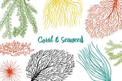 Marine plants seaweed background. vegetable life and food for fish. engraved hand drawn in old sketch, vintage style. Nautical or sea greens, monster or fish Stock Images