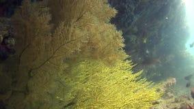 Marine plants underwater on seabed in Galapagos. Relax video. Marine life in ocean stock video footage