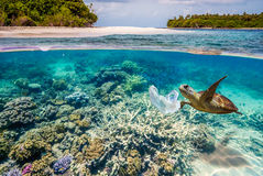 Split shots of under water with marine plastic pollutants Royalty Free Stock Image