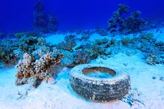 Marine pollution. In the tropical reef of the red sea stock photo