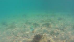 Marine pollution. Underwater Stock Photography