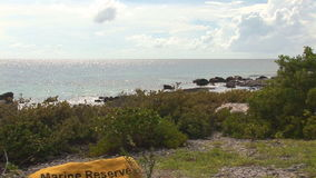 Marine reserve on Bonaire stock footage
