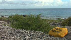 Marine reserve on Bonaire stock video