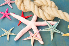 Marine rope with starfish Stock Images