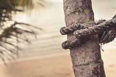 Marine rope wrapped around palm tree on blurred background of tropical beach during sunset Stock Image