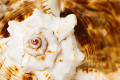 Marine sea shell background Royalty Free Stock Photo