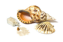 Marine sea shells and sand bottle. Marine sea shells and open sand bottle composition in a studio on white background Royalty Free Stock Image