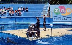 Marine Seal avec un entraîneur Image stock