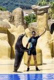 Marine Seal en el acuario que abraza y que baila con el instructor Fotos de archivo