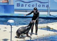 Marine Seal met een trainer stock afbeelding
