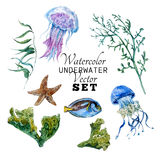 Marine set of Watercolor Vector Tropical Fish. Seaweed Coral Algae and Jellyfish Underwater Watercolor Vector illustration Royalty Free Stock Photography