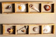 Marine shelf. Stock Image