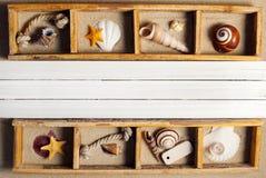 Marine shelf. Stock Images
