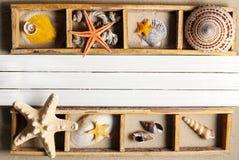 Marine shelf. Stock Photos