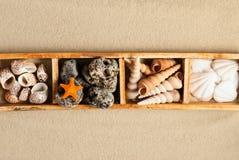 Marine shelf. Royalty Free Stock Images
