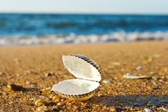 Marine shell Royalty Free Stock Photos