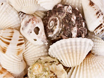 Marine shell background. Background with several marine shells and snails with different textures and shapes Royalty Free Stock Image