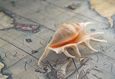 Marine shell on an old-time map Royalty Free Stock Photography