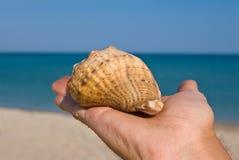 Marine shell on a  palm Stock Image