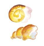 Marine shell  watercolor Royalty Free Stock Photography