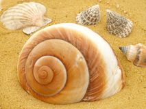 Marine Shells Royalty Free Stock Images