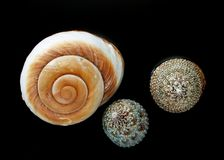 Marine Shells Stock Images