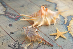 Marine shells on an old-time map Stock Photo