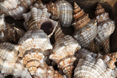 Marine shells at street shop Stock Photos