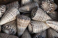 Marine shells at street shop royalty free stock photos
