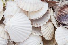Marine shells at street shop stock photography