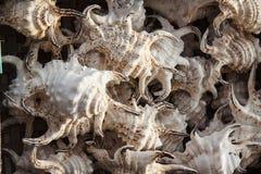 Marine shells at street shop royalty free stock photography