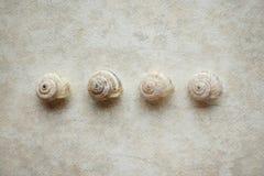 Marine shells Stock Photo