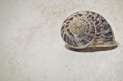 Marine shells. On vintage background - copy space Royalty Free Stock Images