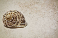 Marine shells. On vintage background - copy space Royalty Free Stock Photo