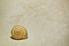 Marine shells. On vintage background - copy space Royalty Free Stock Photos