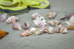 Marine snails and flip flops on sand Royalty Free Stock Photo