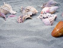 Marine snails and sand Royalty Free Stock Image