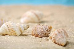 Marine snails in the sand Royalty Free Stock Photo