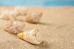 Marine snails in the sand Stock Image