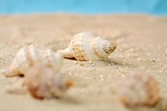 Marine snails in the sand Stock Photo