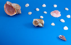 Marine snails and shells Stock Photo