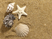 Marine still life Stock Image