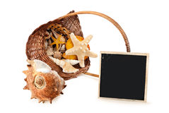 Marine still life. Marine still life of some seashells in basket and paper card, isolated on white royalty free stock photos